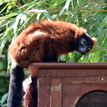 Zoo Amiens Singe